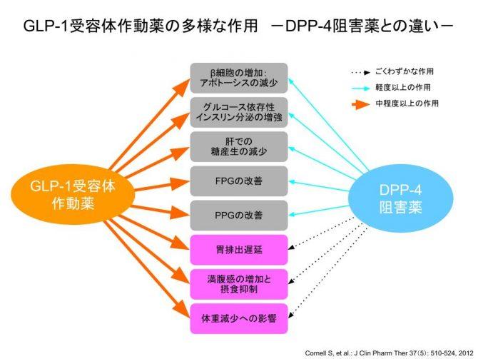 GLP-1受容体作動薬とDPP-4阻害薬の違い