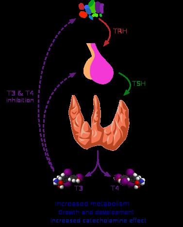 甲状腺クリーゼ