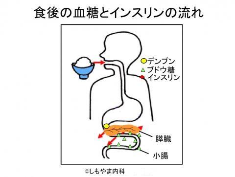 ブドウ糖が小腸から吸収される