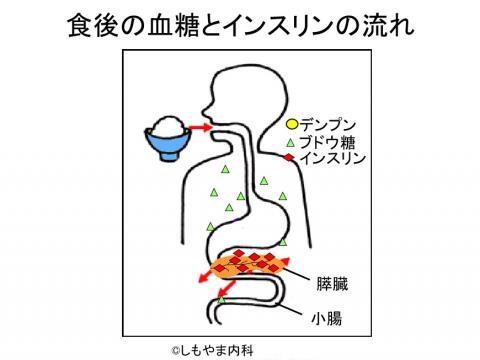 たちまち膵臓からインスリンが分泌される